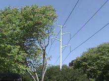 Trees Near Raleigh Power Lines Facing the Ax