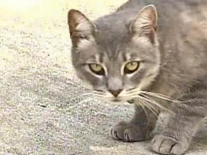 Cat generic
