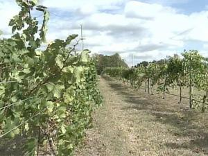 Last year, the state produced about $46 million worth of wine.