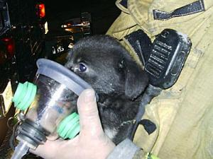 When the puppy had been on oxygen for about five minutes, his eyes opened.