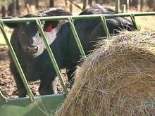 Deal Reached on Drought Aid for N.C. Farmers