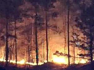 Winds whipped up 302 fires that consumed 9,387 acres across North Carolina on Sunday, Feb. 10, 2008. Fires continued to flare up sporadically on Monday.
