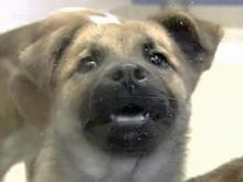 SPCA: Wake Shelter Needs to Stop Gassing Animals