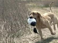 Dog Competition Has Louisburg Businesses Howling With Joy