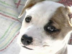cute dog generic