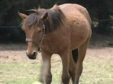 Treatment of horses called into question on Harnett County farm