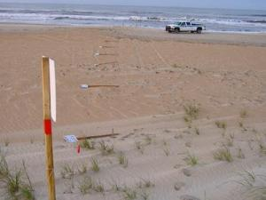 "A park ranger on patrol discovered that 12 posts with ""Area Closed"" signs had been broken at ground level on Saturday, May 10, 2008. The signs marked an area that had been established to protect a tern colony, approximately 1.7 miles east of Ramp 49."