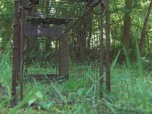 Holly Springs lays traps for rabid animals