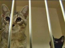 Cary studies requiring sterilization for all pets