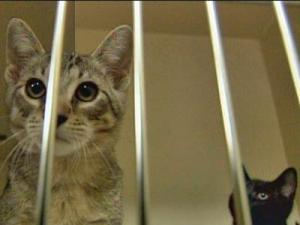 A mother cat and her kitten look out from their cage at an animal shelter run by the Society for the Prevention of Cruelty to  Animals of Wake County.