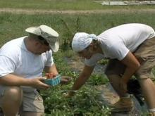 Community farms bring local produce to shareholders