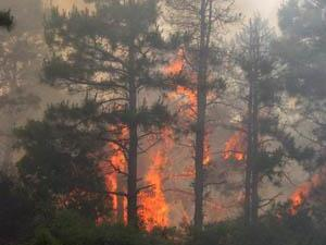 Images from the wildfire on June 5, 2008. (photo courtesy of the NC Division of Forest Resources)