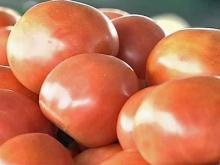 N.C. tomatoes safe, officials say