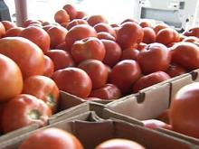 Tomato sales up at state Farmer's Market