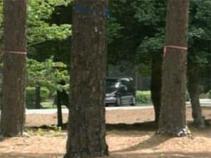 Controversial Pinehurst traffic circle uproots trees