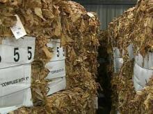 Wilson tobacco market opens