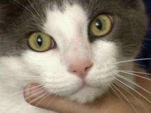 Cat poisoner sought in Pinehurst
