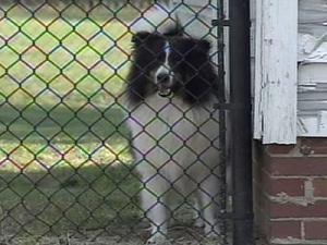 Neighbors complained about Adele Maynard's six dogs barking.