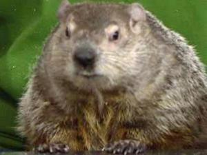 Sir Walter Wally previews Groundhog's Day predictions