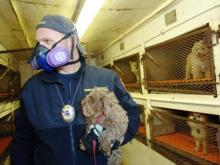 Dogs seized from Goldsboro puppy mill