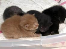 Stray cat becomes surrogate mother