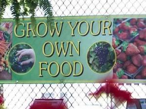 The struggling economy, coupled with high energy and food prices, is pushing many people to grow their own food, instead of buying it.
