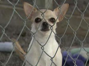 'Puppy mill' bill resurfaces in House