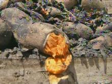 Fire burns sweet-potato warehouse
