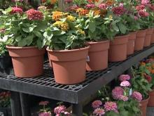 Plant growers want more space at Farmers Market