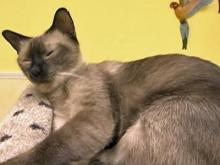 Cat adoptions down for rescue group