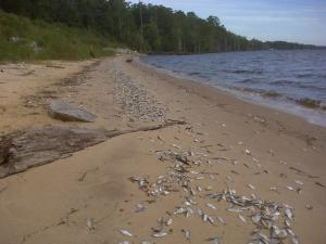 Fisher Landing Beach (Photo courtesy of Tony Butz with the Neuse River Rapid Response Team)