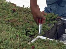 Fire station gets green roof