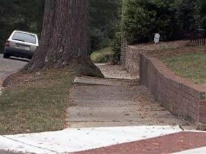 A tree blocks much of a Durham sidewalk near a wheelchair ramp. Advocates for the disabled complain that many sidewalks near curb ramps are impassable.
