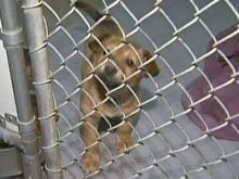 State law gives lost pets a fighting chance