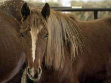 Animals seized from Greene Co. farm