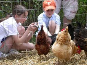 Children enjoy the Hen-side the Beltline Tour d'Coop.