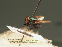 Entomologists working crime scenes