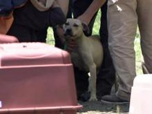 Thirty-three fighting dogs, as well as tools for dog-fighting and a ring, were found during the raid at the home along Buck Hill Road in Mount Olive.
