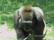 NC Zoo: Animal enclosures are secure