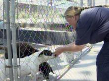 Animal shelter faces state deadline