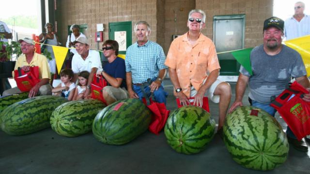 The farmers pose with their entries in the Biggest Watermelon weigh-off: (right to left) Larry Boyette, 170.5 pounds, third place; Donald Murphy, 184 pounds, first place; Robert Ward, 153 pounds, fifth place; H.C. Williams, 168.5 pounds, fourth place; Charles Payne, 136.5 pounds, sixth place; and Jimmy Briggs, 180 pounds, second place.