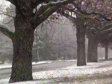 Early snow leaves slick roads behind