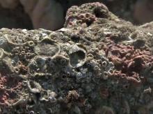 2011: Blackbeard's anchor recovered