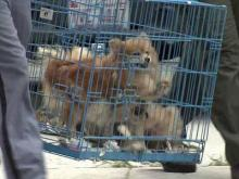 More than 60 dogs were seized from a Raleigh home on Professor Street on Aug. 4, 2011.