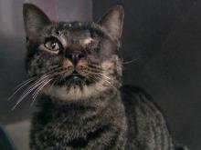 Cat survives crossbow attack
