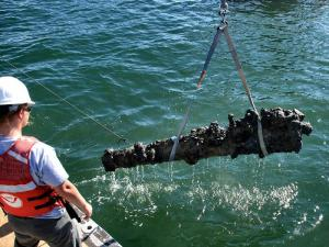 Researchers raised a 2,000-pound cannon on Oct. 26, 2011, from the wreck of the pirate Blackbeard's ship, which has been on the ocean floor off the North Carolina coast for nearly 300 years.