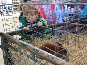 A boy looks at rabbits at NC State Farm Animal Days.