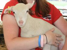 Children can meet and pet farm animals at North Carolina State University's Lake Wheeler Road Field Laboratory March 28-30, 2012.