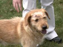 Roaming dog shot three times by neighbor in Kittrell