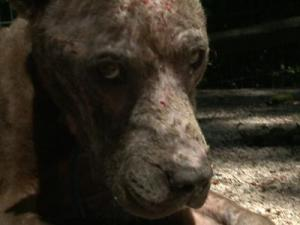 Hope, who is approximately 2 or 3 years old, is on the mend in Vance County after animal control officers found the animal tied to pole with a telephone cord.